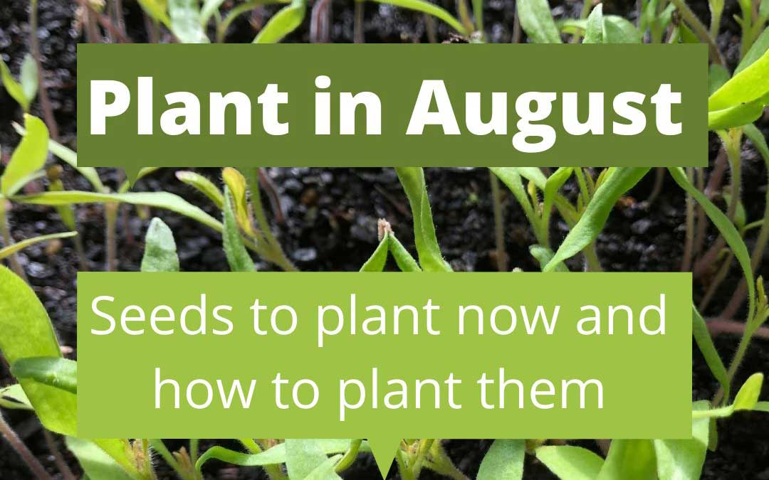 What to plant in August in Melbourne
