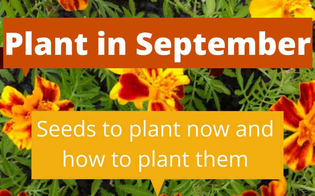 What to plant in September in Melbourne