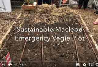 Sustainable Macleod Emergency Vegie Plot on You Tube