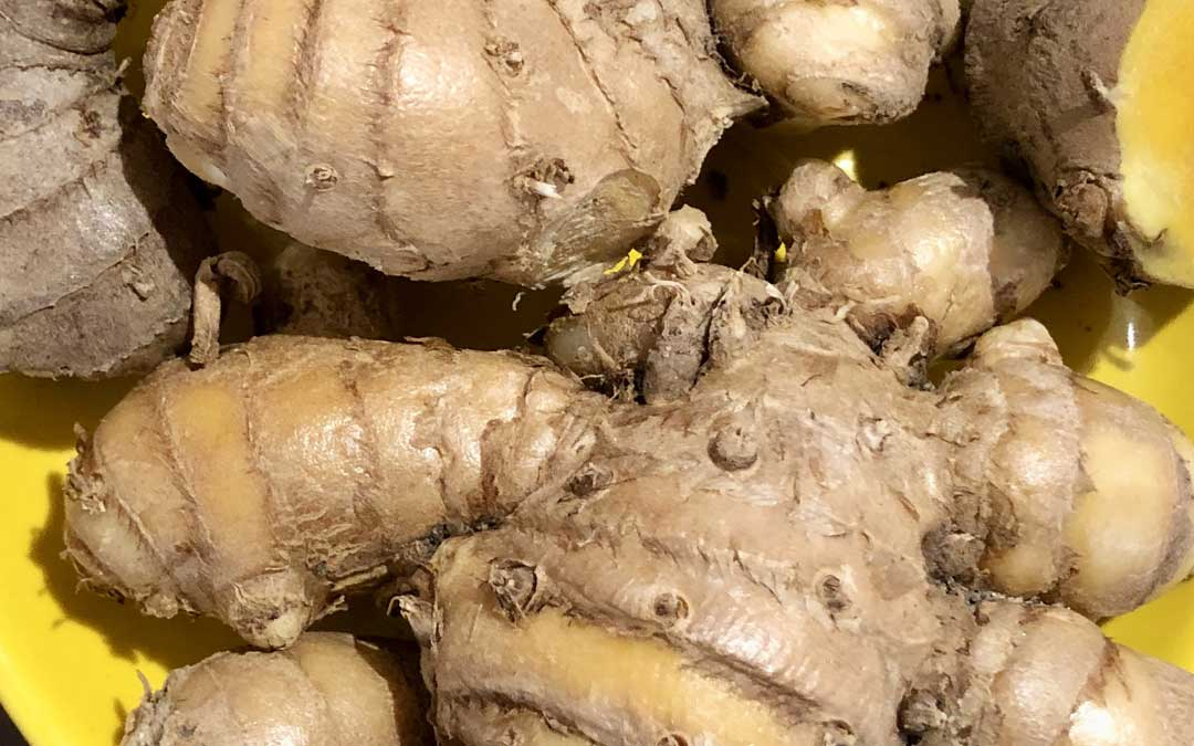 Growing ginger, galangal and turmeric in Melbourne
