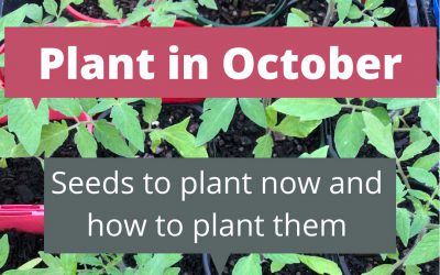 What to plant in October in Melbourne