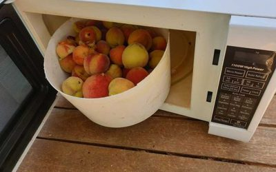Microwave your fruit fly infected fruit