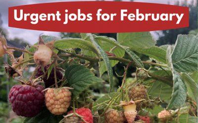 Urgent jobs for February