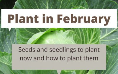 What to plant in February in Melbourne