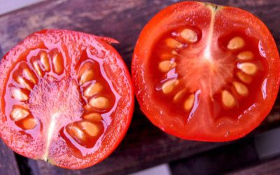 Fermenting tomato seed to remove disease