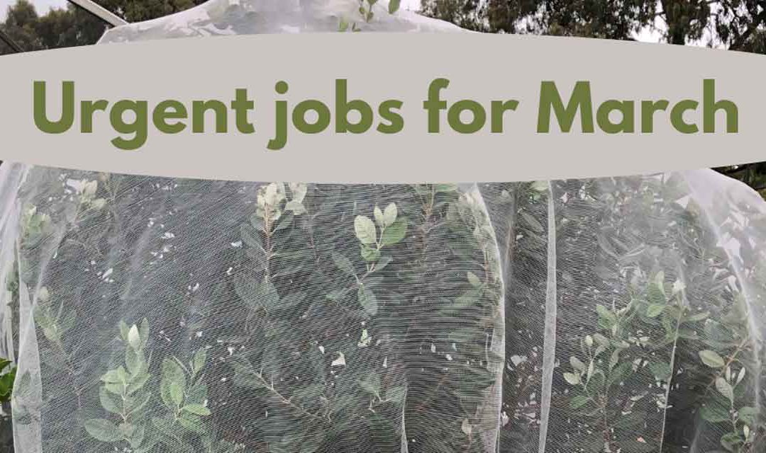 Urgent jobs in the garden for March