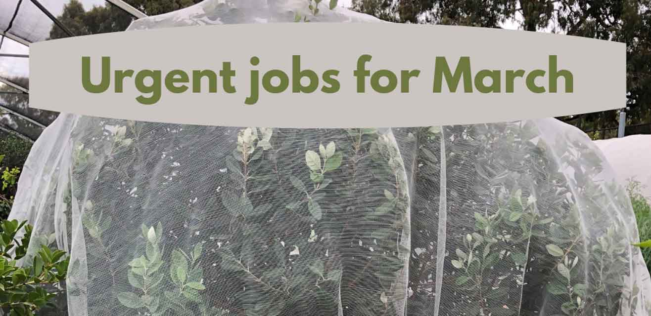 Urgent jobs for March in the garden