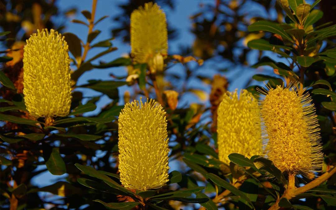 Kulin nation plant use: a free downloadable resource for our area