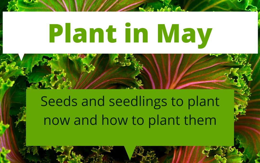 What to plant in May in Melbourne