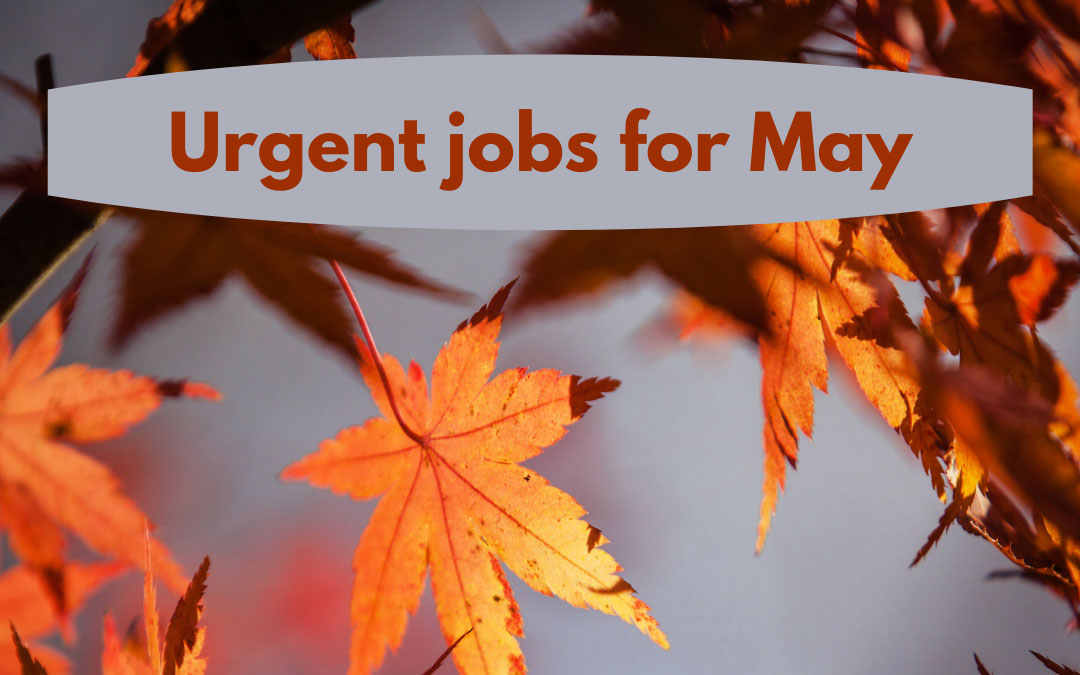 Urgent jobs in the garden for May