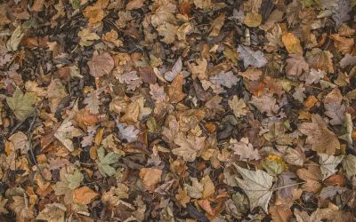 Quick composting of autumn leaves