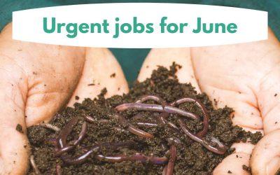 Urgent jobs in the garden for June