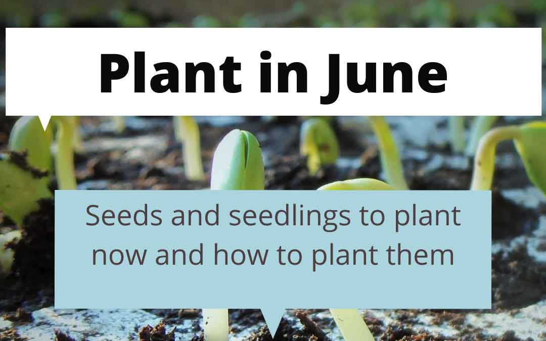 What to plant in June in Melbourne