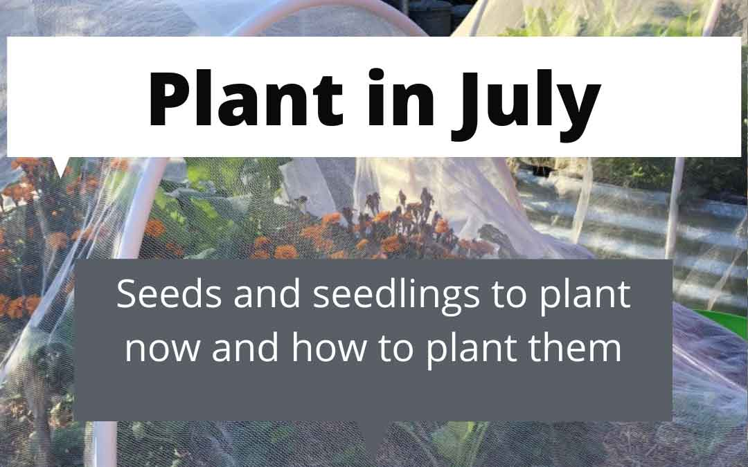 What to plant in July in melbourne