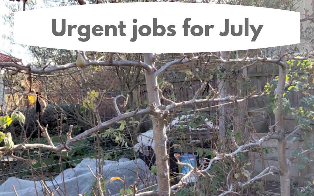 urgent jobs in the garden in July in melbourne