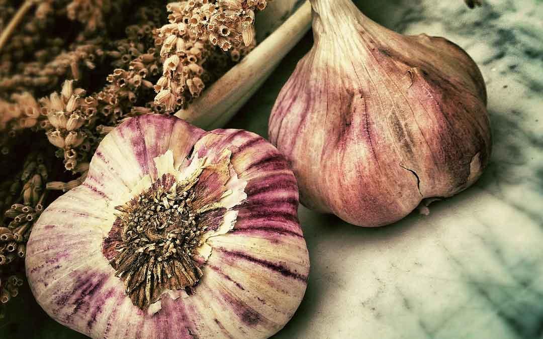 August garlic hint