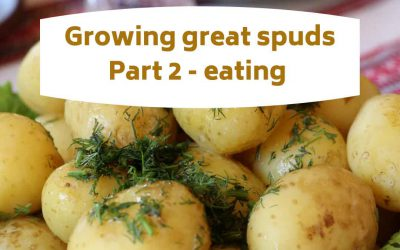 Growing great spuds part 2 – eating