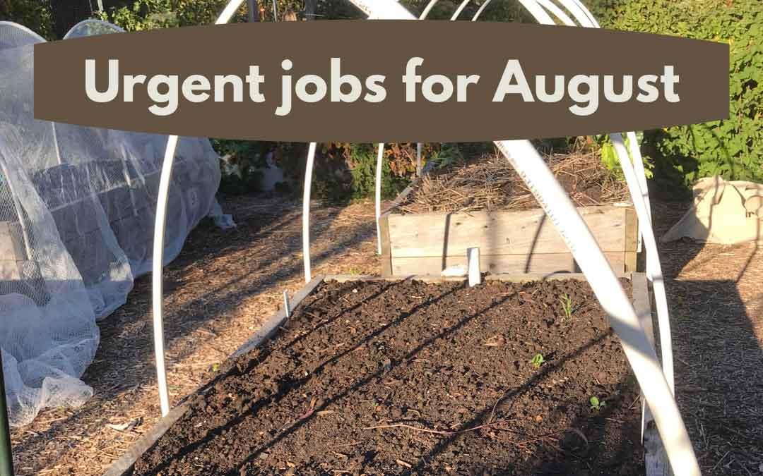 Urgent jobs in the garden for August