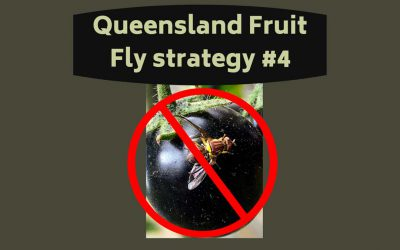 Queensland Fruit Fly Strategy Blog #4 – Put out protein bait NOW!
