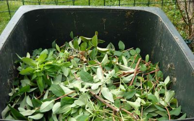 We need to talk about…your green waste bin