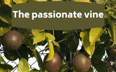 The passionate vine! Top tips for growing passionfruit
