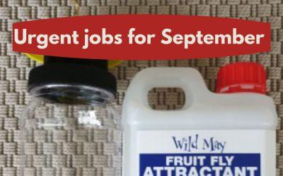 Urgent jobs in the garden for September