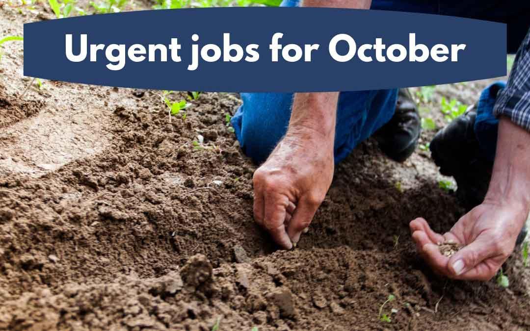 Urgent jobs in the garden for October