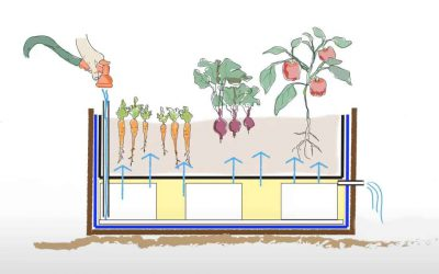 The how and why of wicking beds
